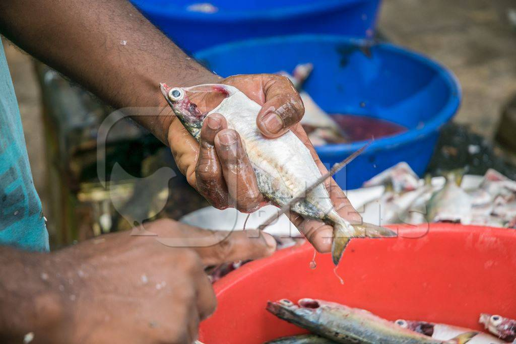 Man holding dead fish in hand and cutting off scales with knife