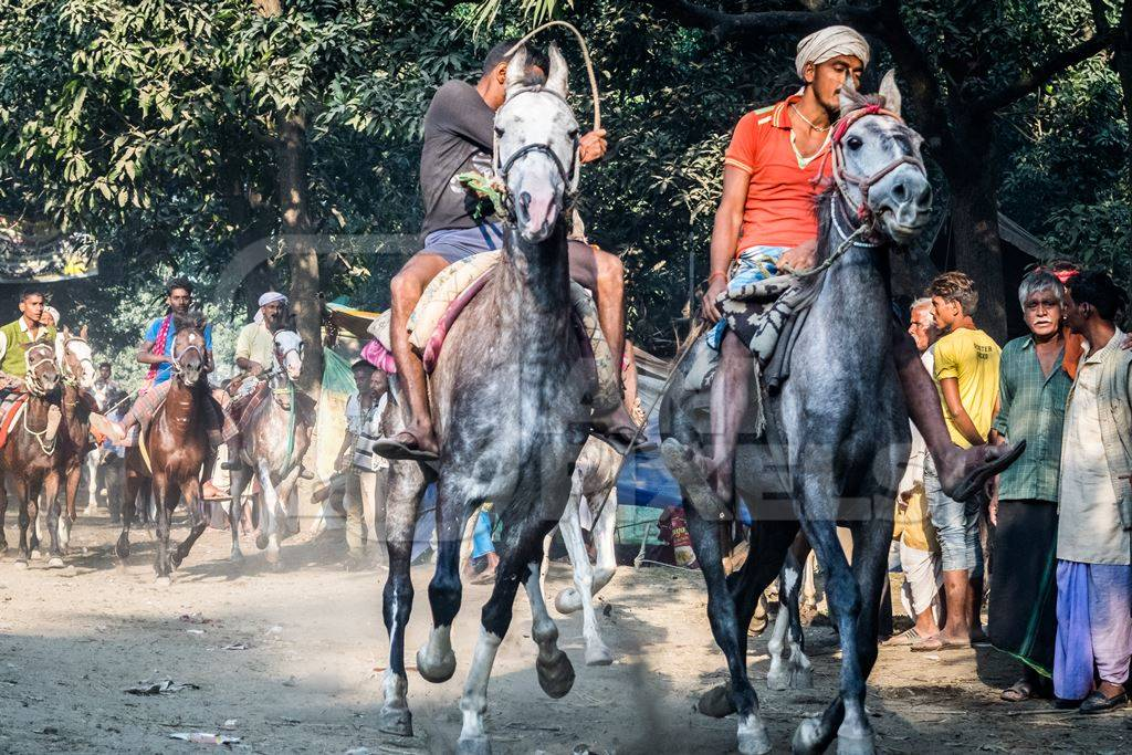 Grey horses being whipped and ridden in a horse race at Sonepur fair