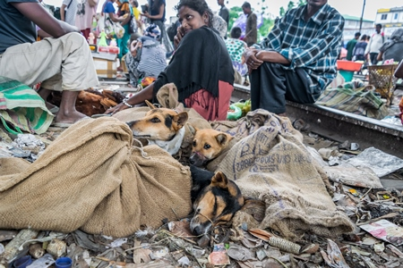 Dogs in sacks with their mouths tied at a dog meat market by the railway tracks