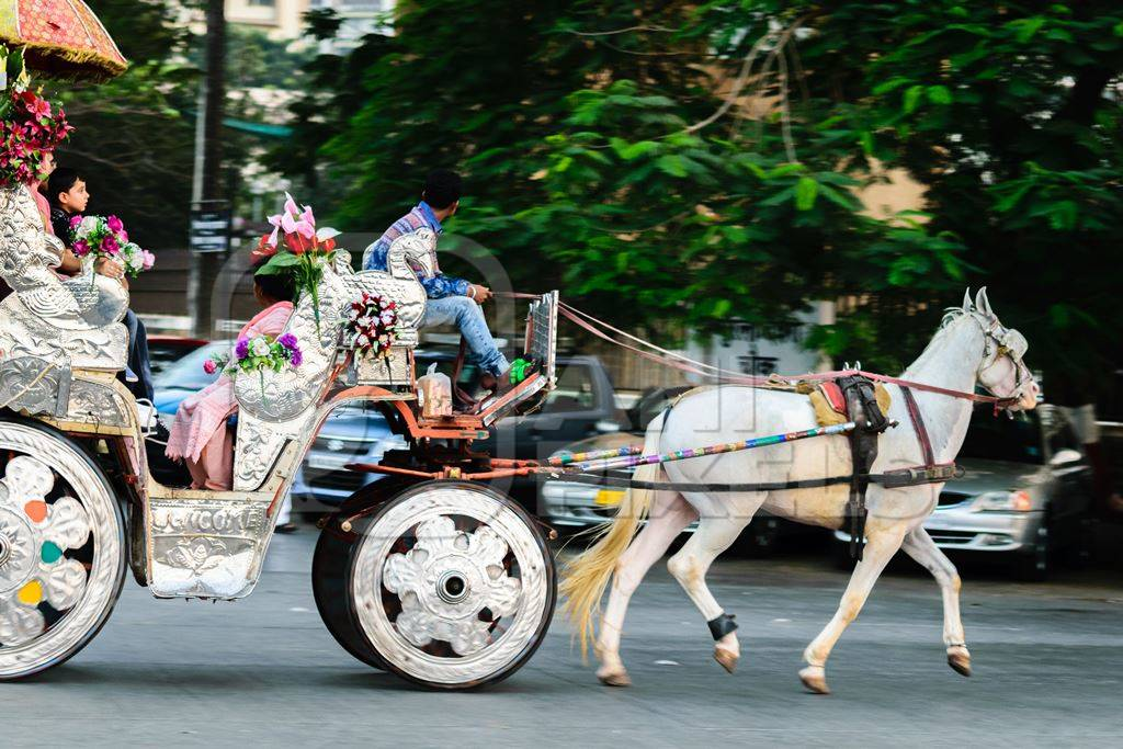 White horse with silver carriage used for carriage rides in Mumbai