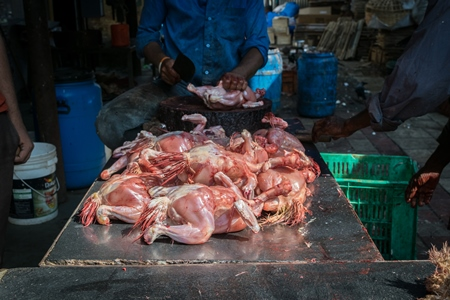 Workers ripping feathers off broiler chicken in unhygienic dirty conditions at Crawford meat market, Mumbai
