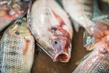 Alive fish on sale gasping in distress at the Mothers