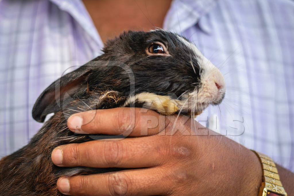 Man holding rabbit on sale for meat at Juna Bazaar market