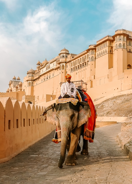 Elephant used for tourist animal rides at Amber fort and Palace near Jaipur, Rajasthan, India