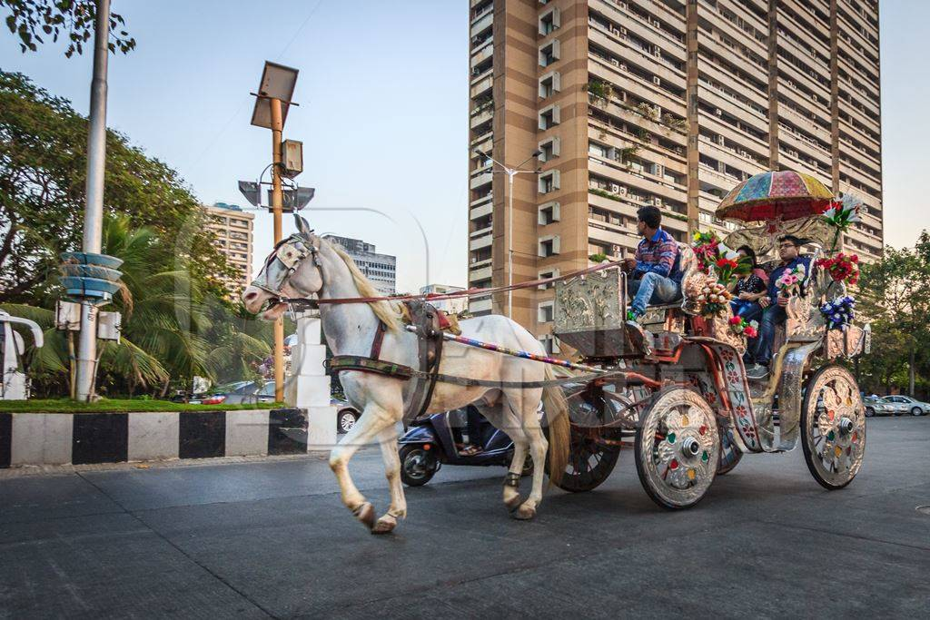 White carriage horse in harness used for tourist rides