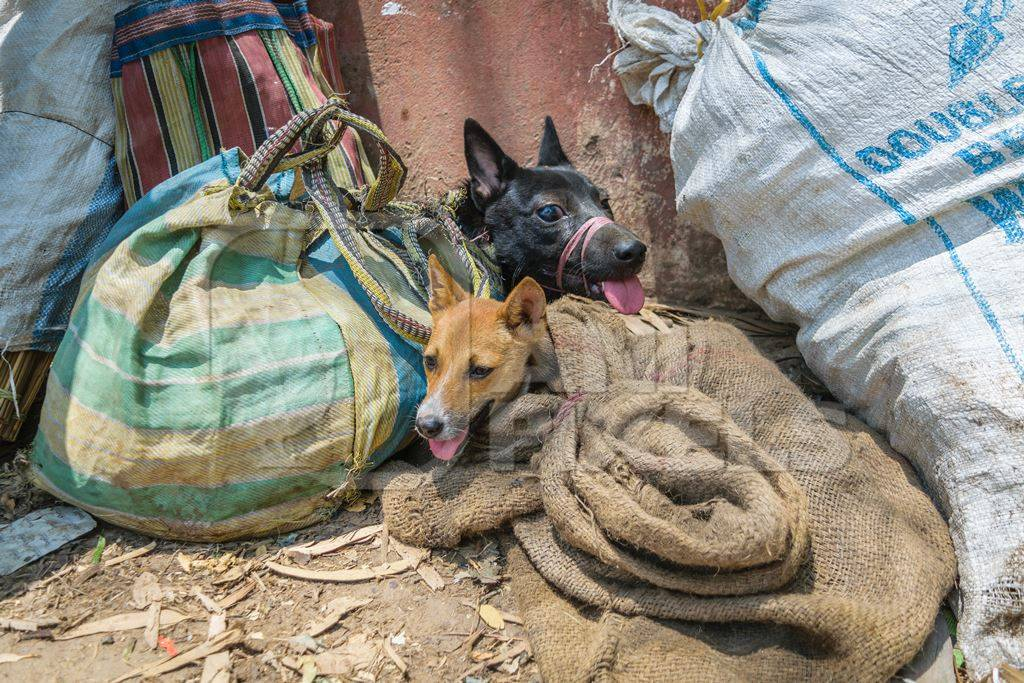 Dogs tied up in sacks on sale for meat at dog market