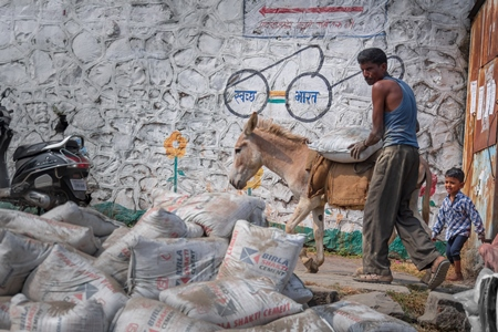 Working Indian donkey used for animal labour with large pile of heavy sacks of cement in an urban city in Maharashtra in India