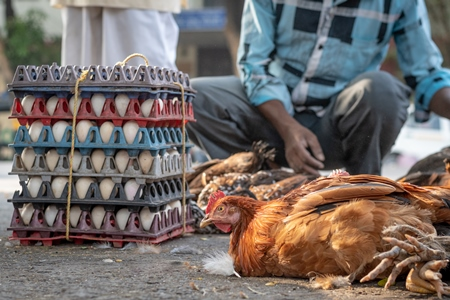 Chickens and eggs on the ground on sale at a live animal market at Juna Bazaar in Pune, India