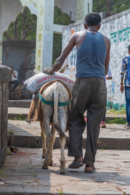 Working donkey with man following behind used for animal labour to carry heavy sacks of cement in an urban city in Maharashtra in India