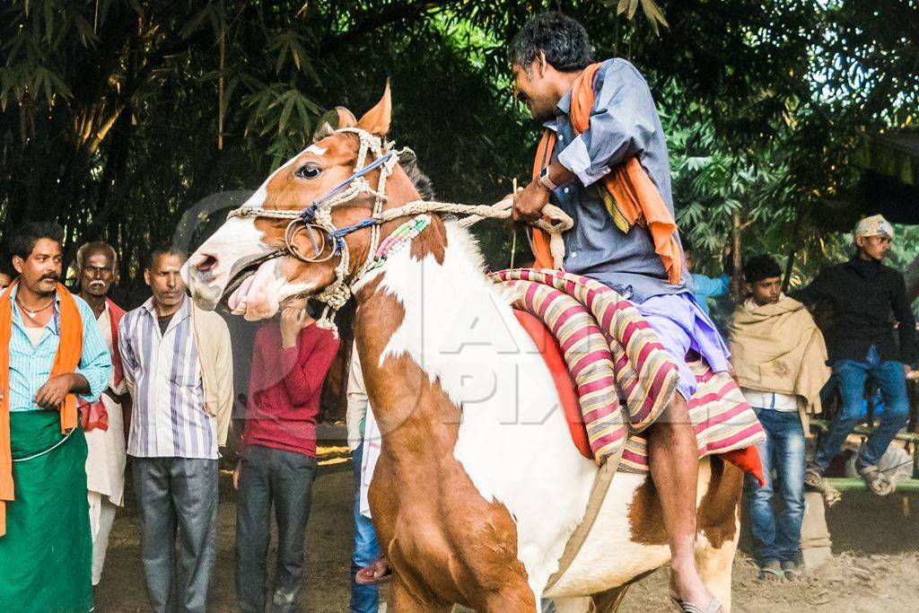 One man riding a brown and white horse at a horse race at Sonepur horse fair