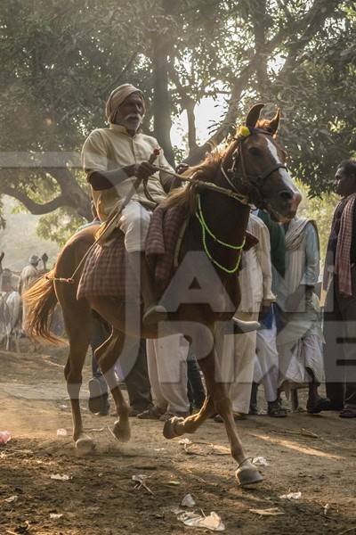 Horse in a horse race at Sonepur cattle fair with spectators watching