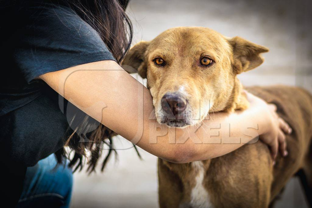 Volunteer animal rescuer caring for a brown street dog