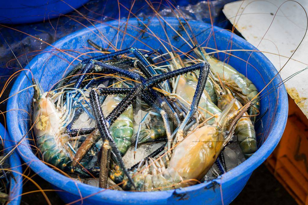 Blue bucket of crabs on sale at a fish market