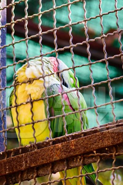 Sad looking green parakeet bird behind bars in cage in Byculla zoo