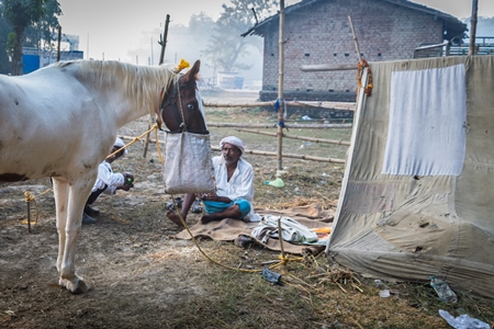 Men with horses and tent in a field in the early morning at Sonepur cattle fair, Bihar