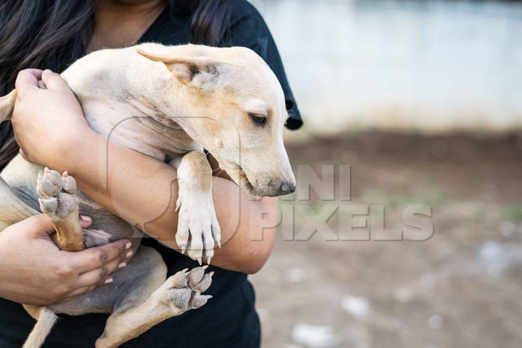 Volunteer animal rescuer girl holding a pale brown street puppy in her arms
