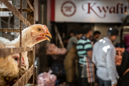 White chicken reaching through the bars of a cage with chicken meat shop and men in background at poultry meat market