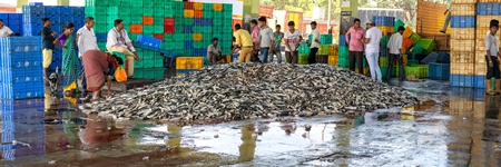 Panorama of a huge mound of fish at Mumbai Fish Market at Sassoon Dock in Mumbai, India, 2016