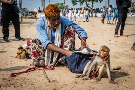 Man with dancing monkeys begging for money at Pushkar camel fair