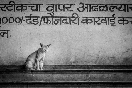 Indian street or stray cat outside fish market in Maharashtra, India
