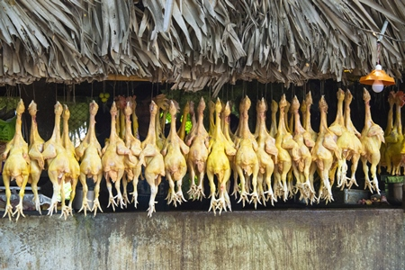 Photo of row of dead chickens hung up for sale at market, in Andhra Pradesh, India