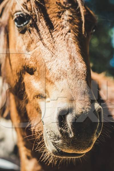 Close up of face of brown horse in sunglight
