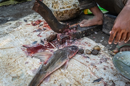 Fish being de-scaled, de-finned and gutted by a worker on the ground at a fish market in Bihar