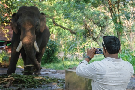Man taking photo with mobile phone of elephant chained at Guruvayur elephant camp, used for temples and religious festivals in Kerala