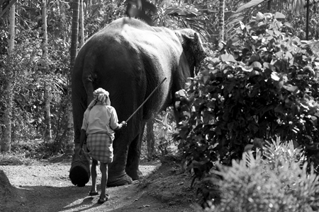 Elephant handler hitting elephant with a stick in the forest in black and white