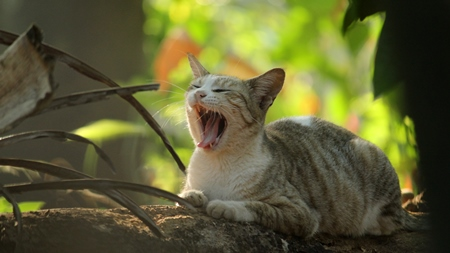 Street cat sitting on wall yawning with green background