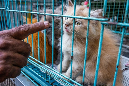 Man pointing at persian pedigree kittens in cage on sale as pets at Crawford pet market in Mumbai India